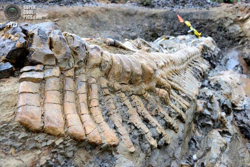 кости динозавров фото