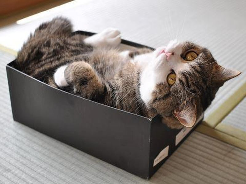 Почему кошки так любят коробки?
