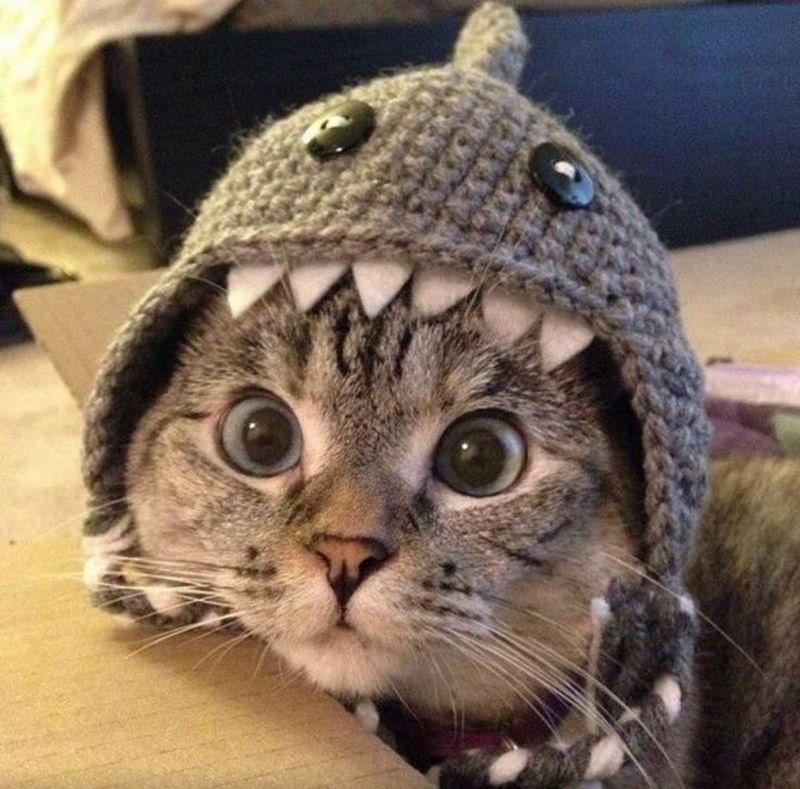 Кошка Нала, фото фотография картинка