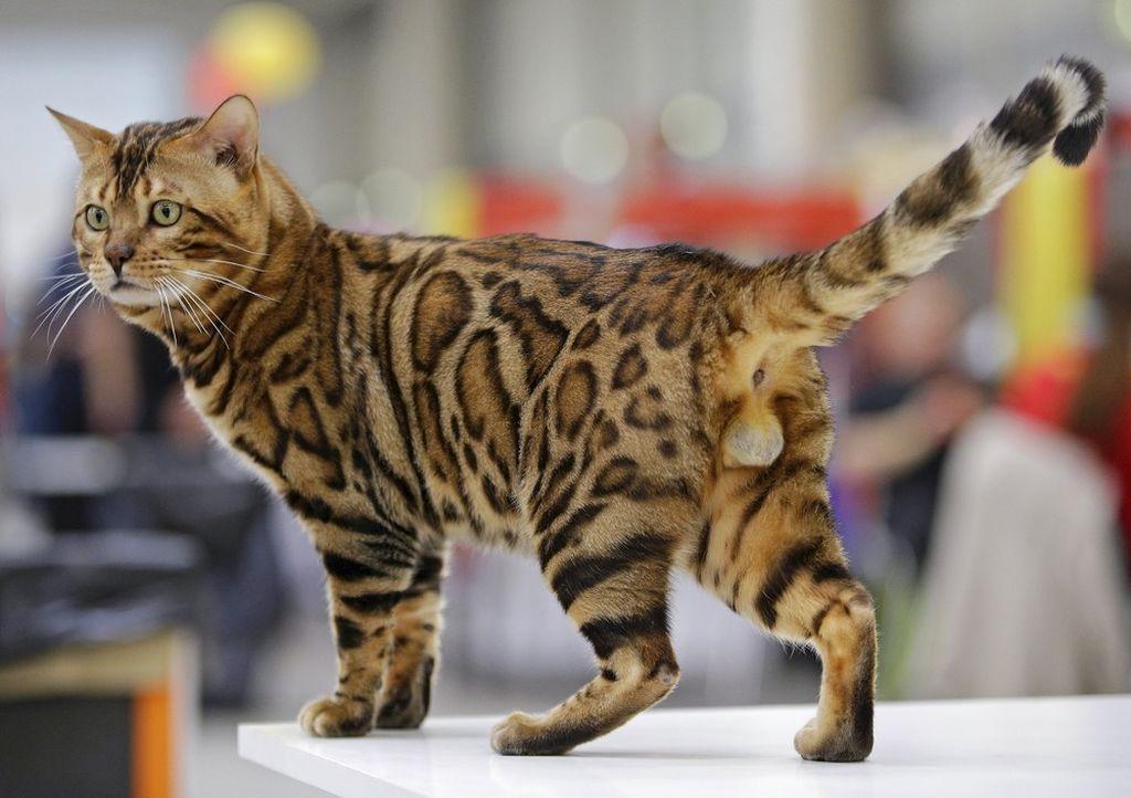 фото выставка кошек