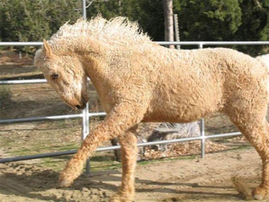 породы лошадей с фото