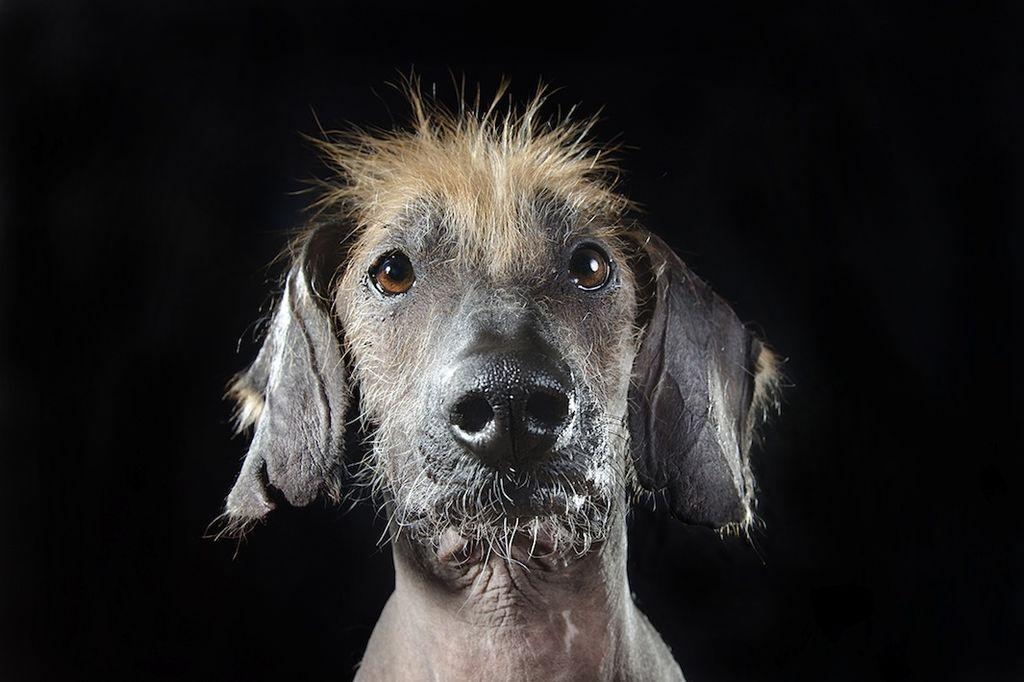 Голые собаки фотографа Софи Гаманд (Sophie Gaming)