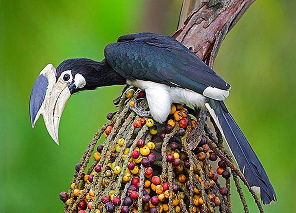 Птицы, которые вызывают неподдельное восхищение