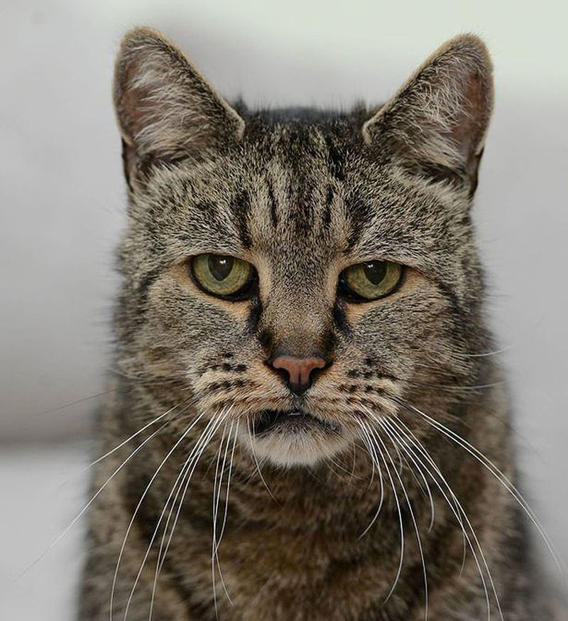 самый старый кот в мире согревающие качества