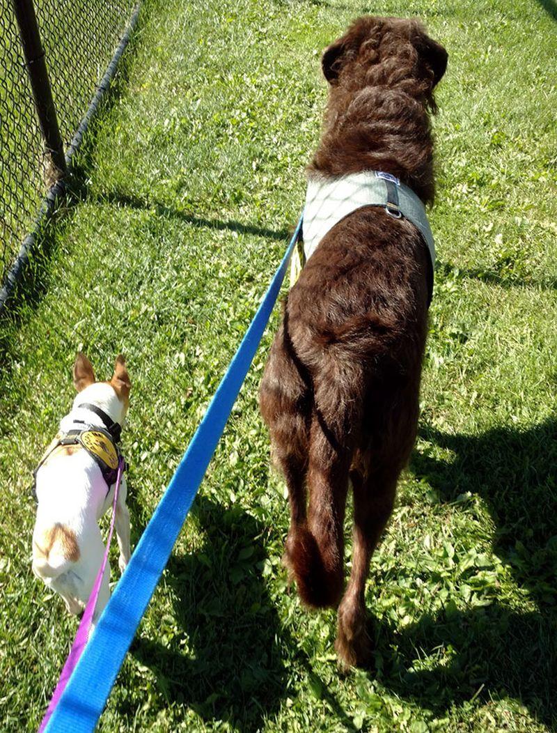 собачья аллергия чем лечить как проявляется