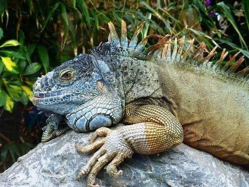 11 самых неожиданных животных, которые ...: http://animalworld.com.ua/news/11-samyh-neozhidannyh-zhivotnyh-kotoryje-sluzhat-cheloveku