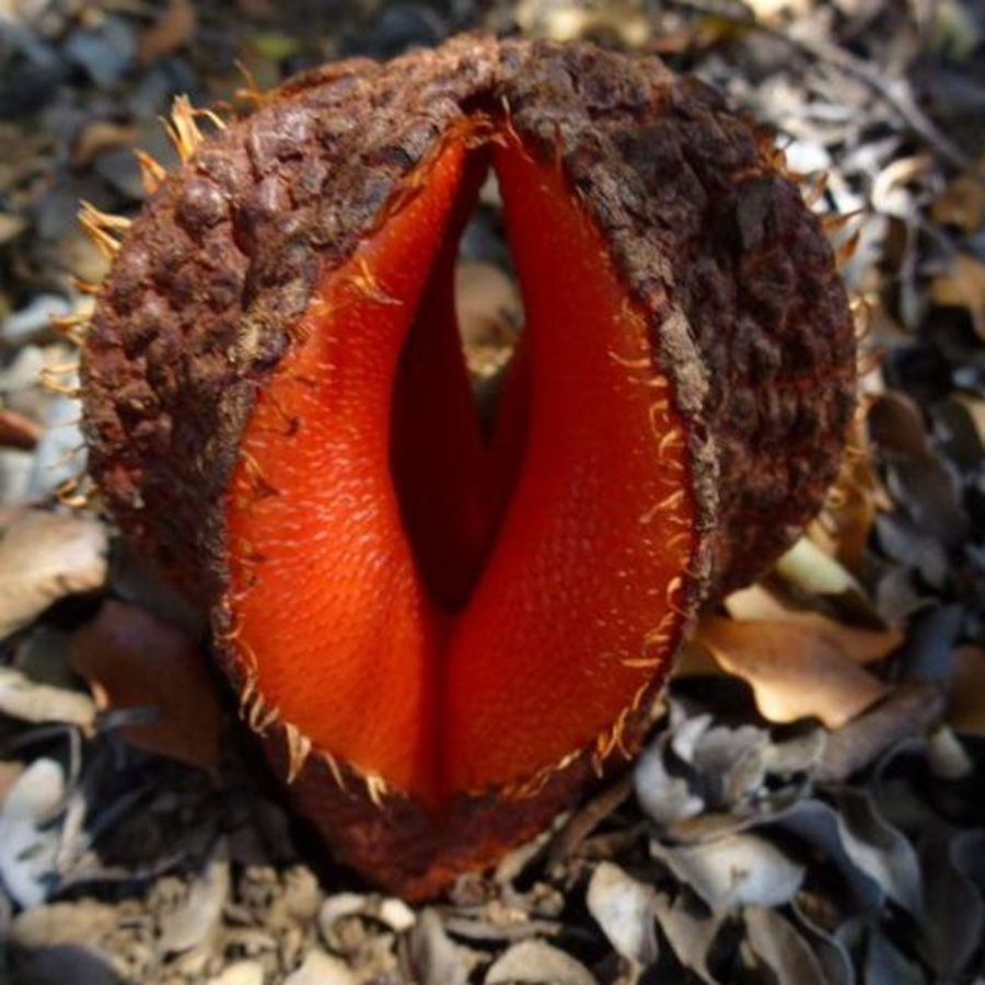 Самые удивительные растения мира Удивительные свойства