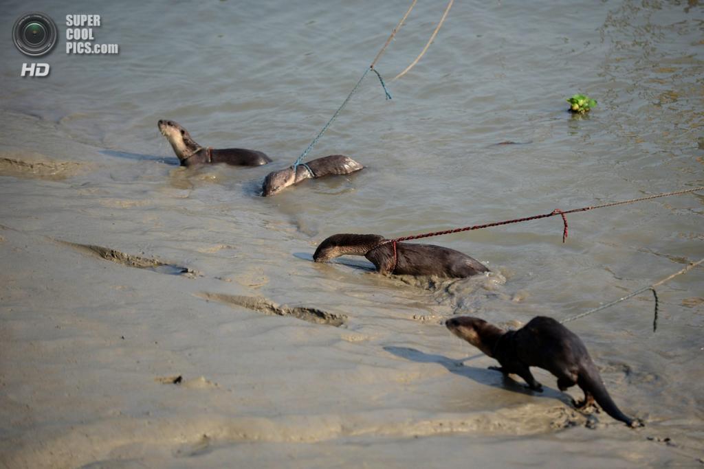 штраф за ловлю ондатры