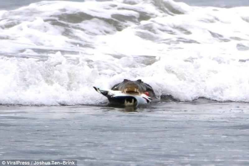Крокодил на пляже 78