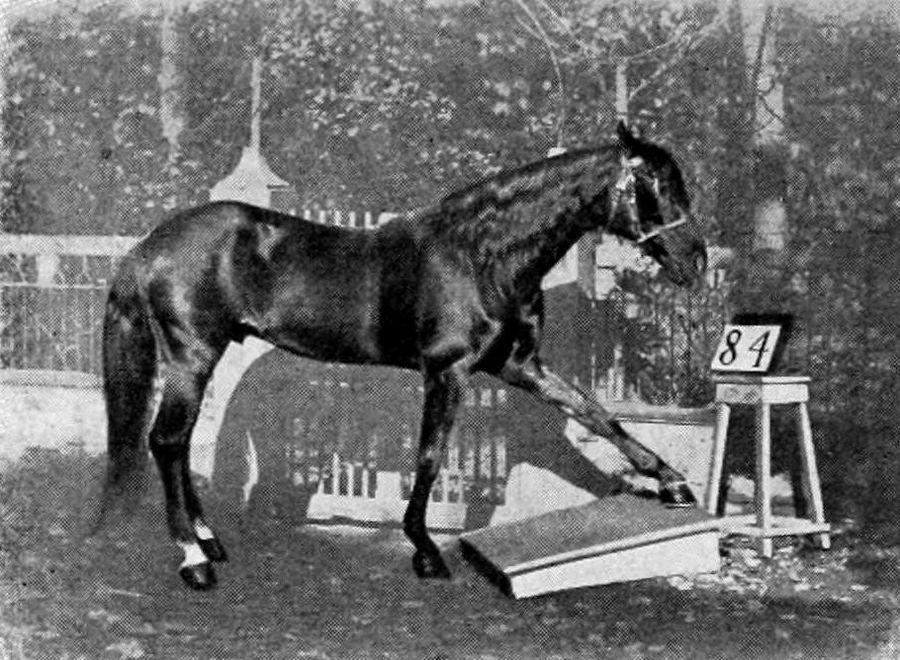 Необычайная история Ганса, коня, который умел извлекать квадратные корни