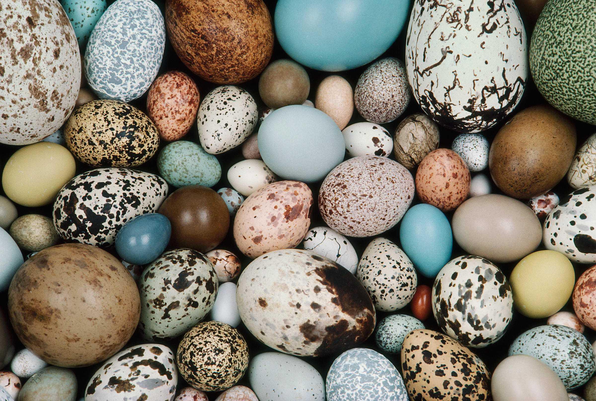 Яйца динозавров