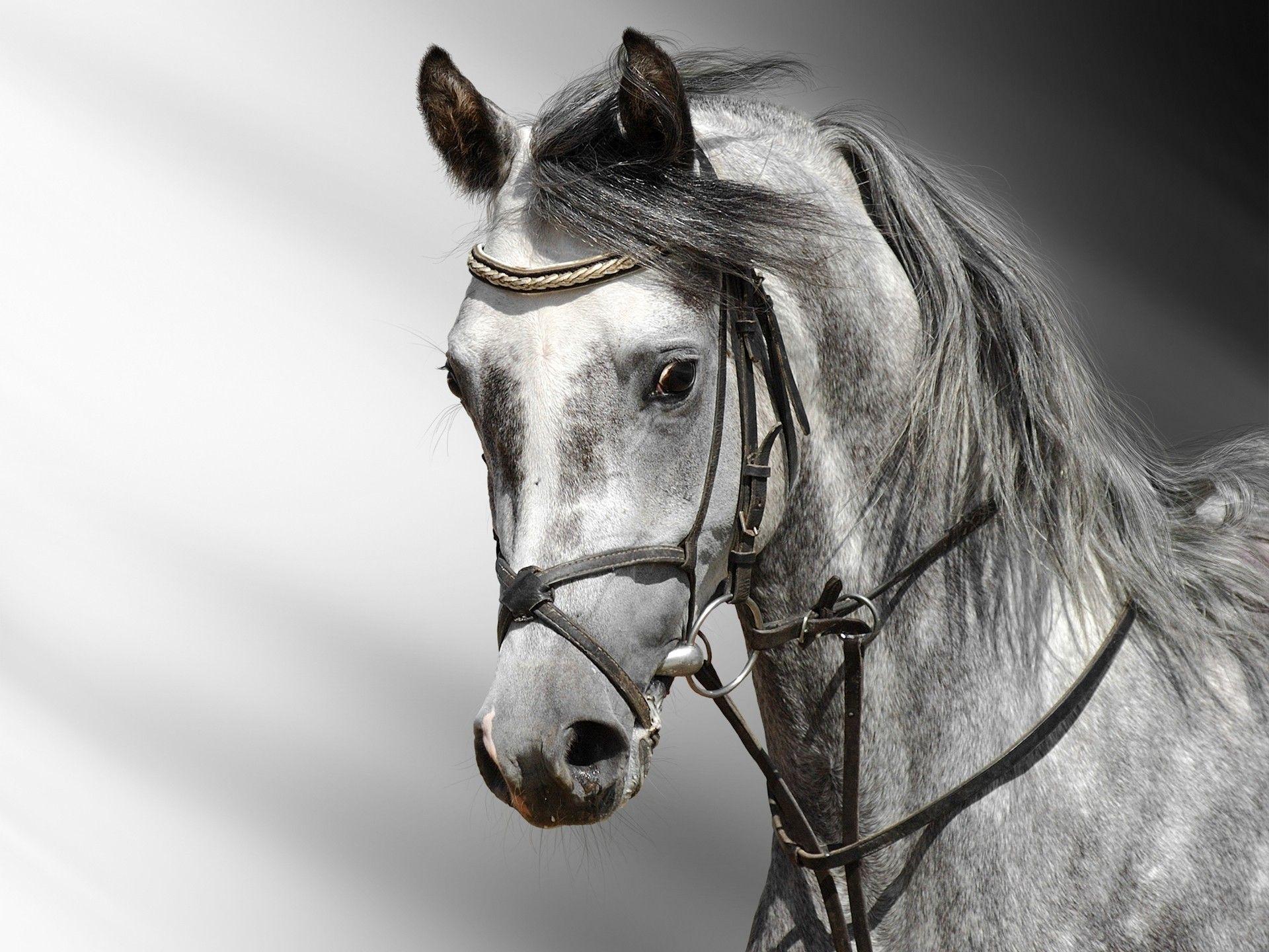 Лошади обязательно припомнят, в каком настроении с ними общались в прошлый раз...