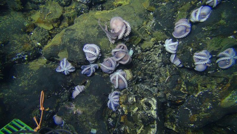 На дне океана обнаружен самый неудачный