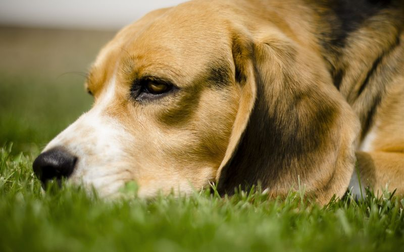 5 вещей, за которые собаки на нас тайно обижаются