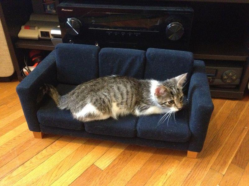 Почему бессмысленно отучать кота драть диван