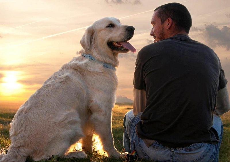 Почему человеку проще любить собаку, чем другого человека