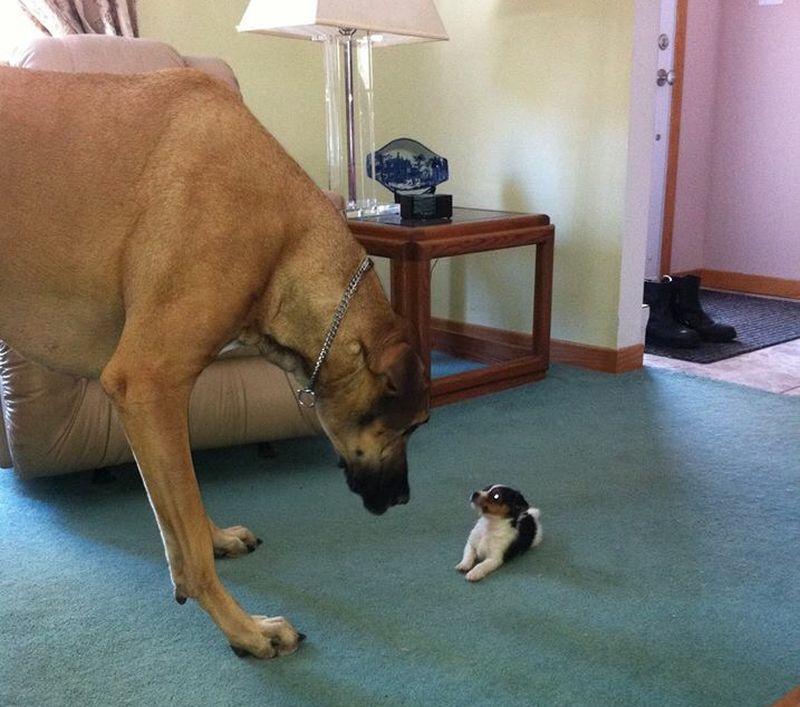 Почему собаки реже волков примиряются друг с другом после конфликтов