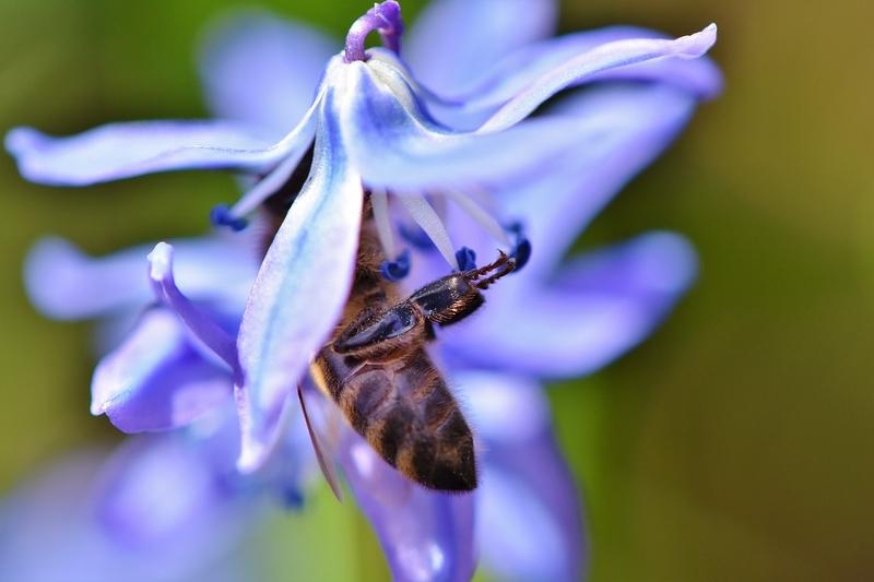 Какие цветы выбирают пчелы?