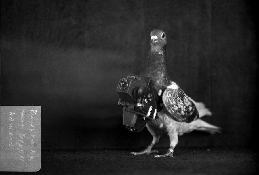 Голуби-фотографы