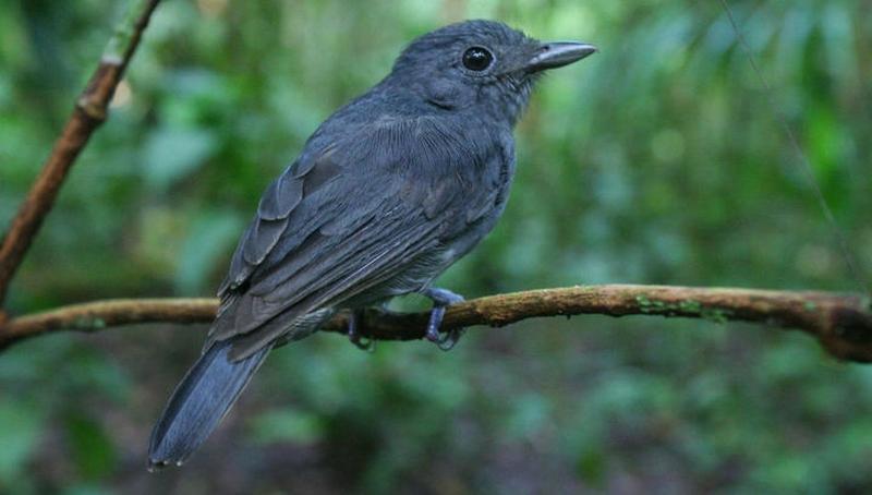 """""""караульные"""" птицы оповестят своих соседей о надвигающейся опасности"""