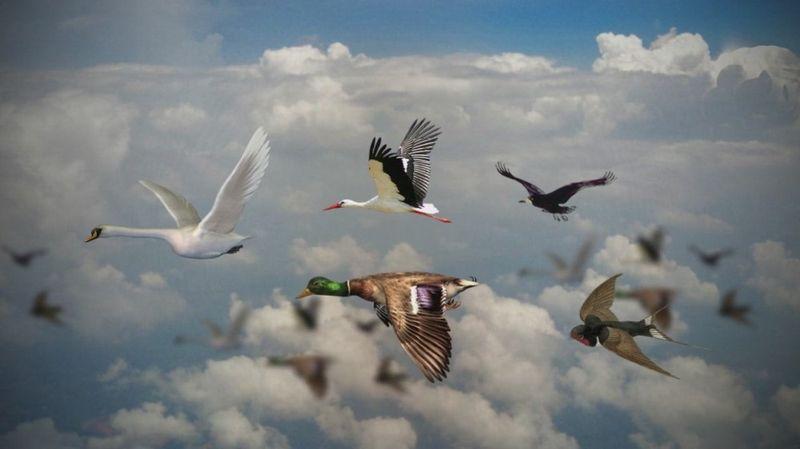 Почему перелетные птицы возвращаются весной обратно?