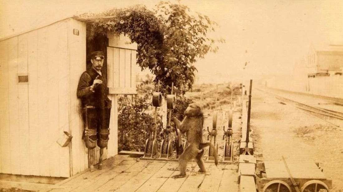 Стрелочник Джек: павиан, который работал на железной дороге – и никогда не ошибался