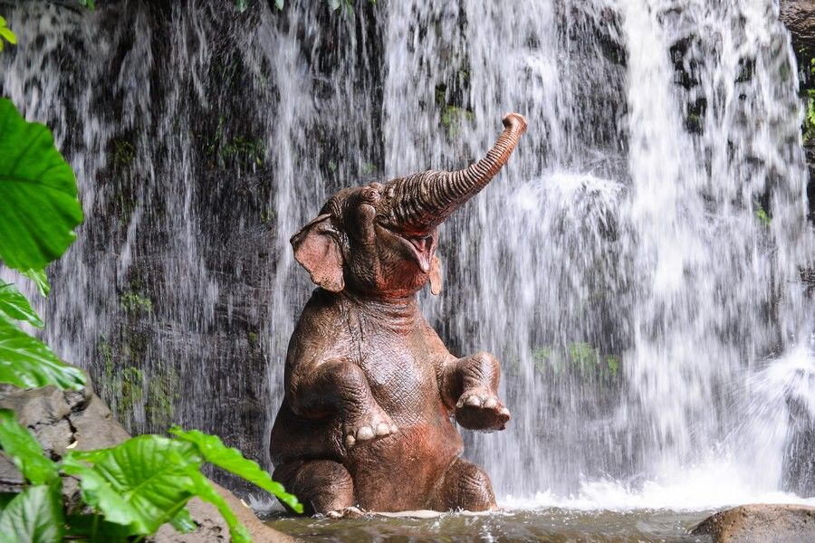 Смішні і забавні тварини
