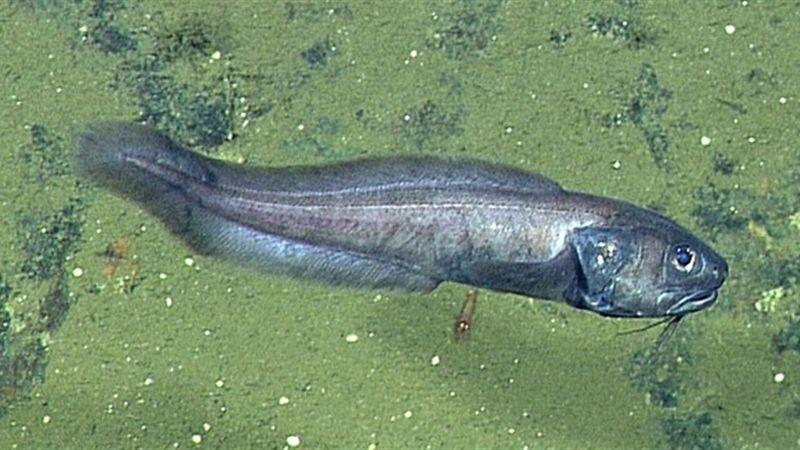 Учёные описали рыб, процветающих в