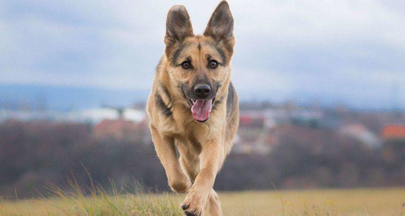 Прояснена роль собак в формировании рациона людей неолита