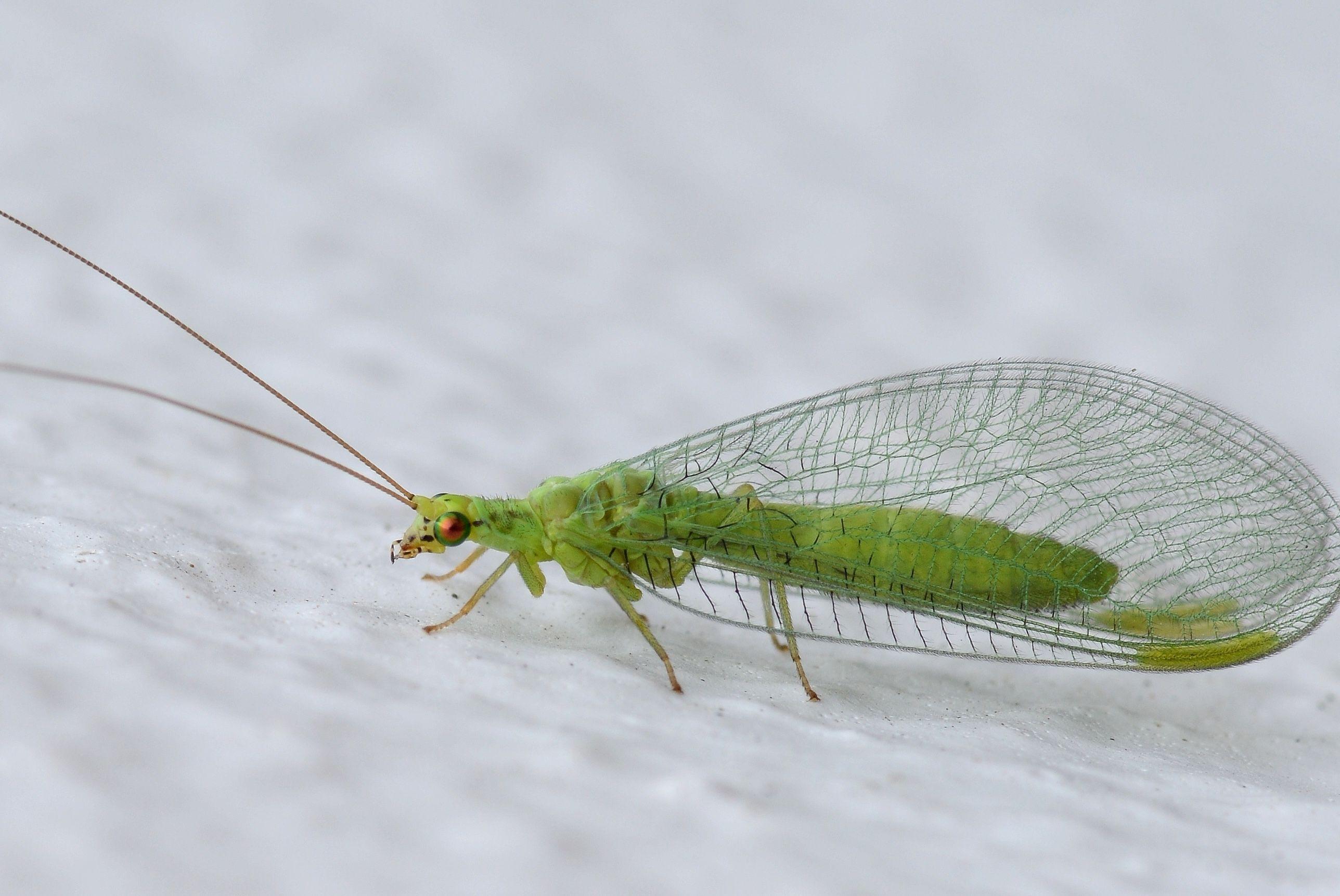 Палеонтологи описали насекомое, совершившее первый полет на земле