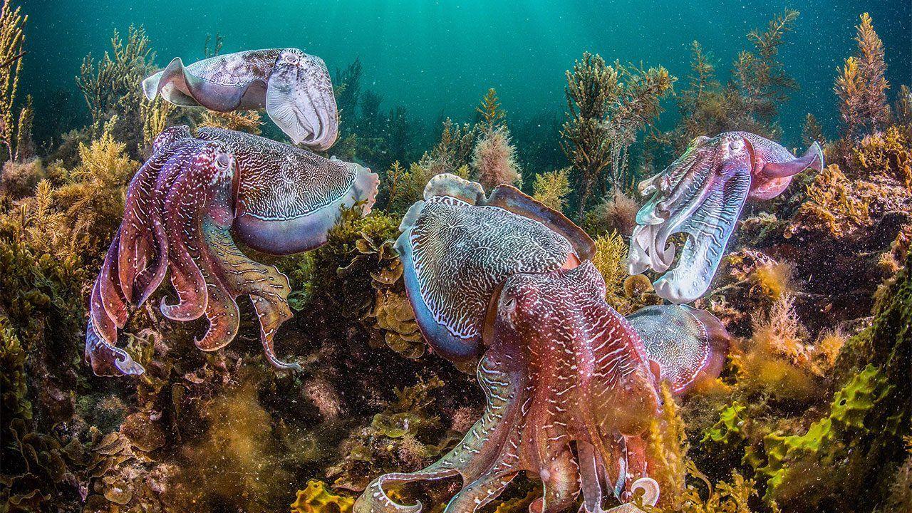 Биологи выступили против «осьминожьих ферм»