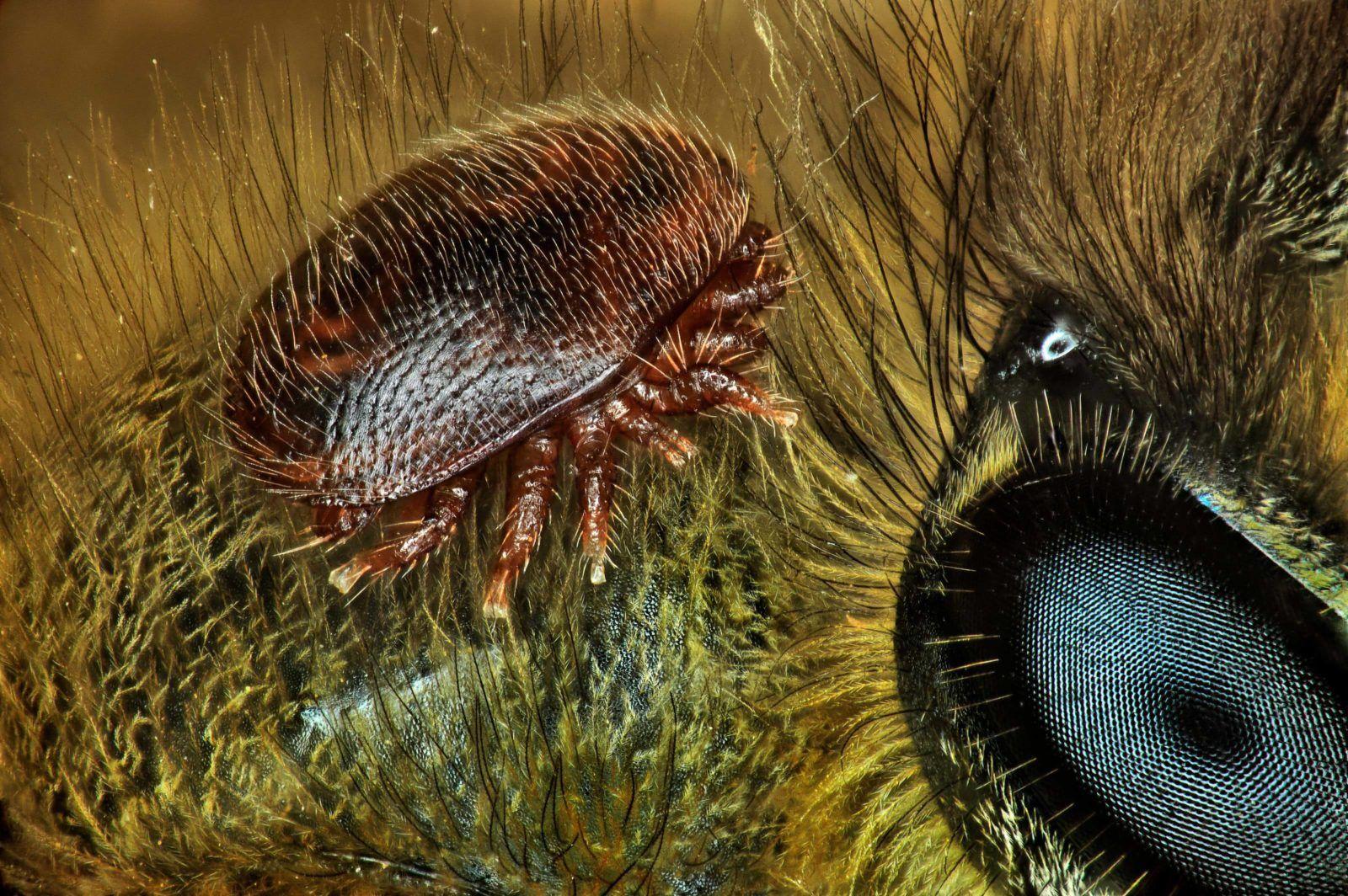 Ученые назвали главную причину разрушения пчелиных семей