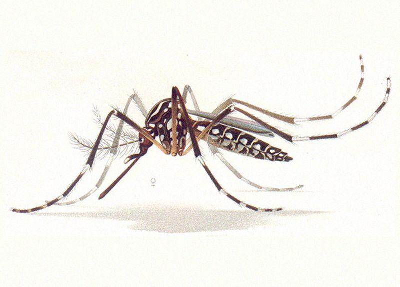 Бактерии из кишечника нематод оказались источником эффективного репеллента от комаров