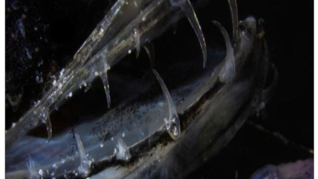 На английском языке эти существа называются dragonfish, поэтому по-русски их по аналогии стали называть рыбами-драконами.