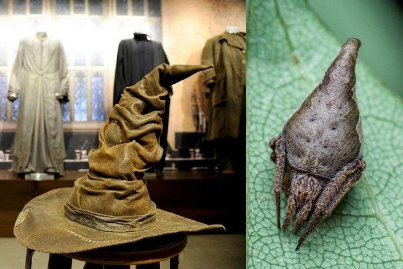 Паук шляпа Гриффиндора (Eriovixia gryffindori)