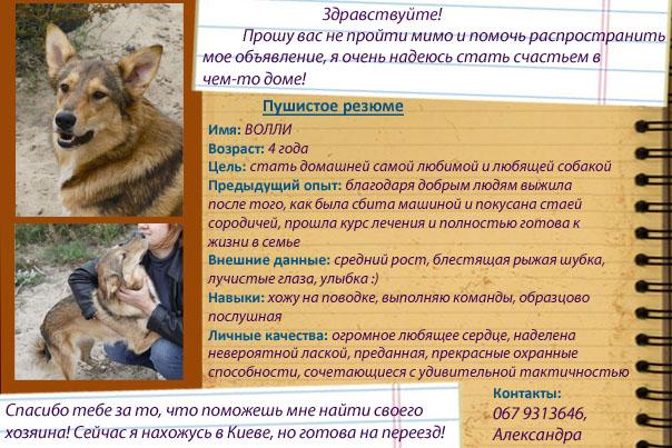 Объявление отдам животных в руки куплю/продам картриджи частные объявления