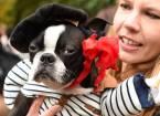 У нью-йорку пройшов незвичайних парад собак