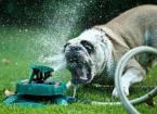 Летние забавы собак