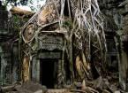 Гармонія дерева і каменю храму та пром, околиці сием ріпа, Камбоджа