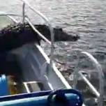 Аллигатор запрыгнул в лодку к туристам