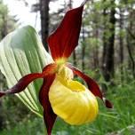 Некоторые виды растений проводят в спячке до 20 лет
