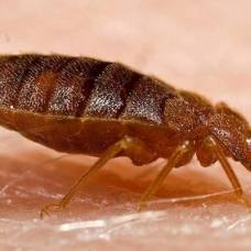 отравить паразитов в организме