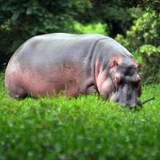 В зоопарке города майами родился