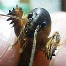самые опасные паразиты для человека