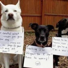 почему у собаки пахнет изо рта помойкой